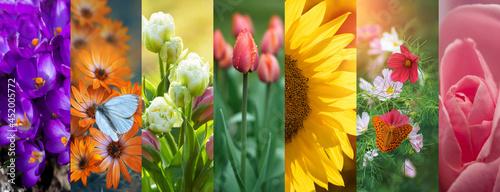 kwiaty, kolaż, kolory natury