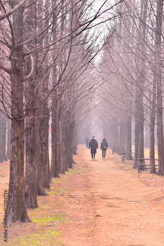 늦가을 가로수길을 걷고 있는 커플 Fotobehang