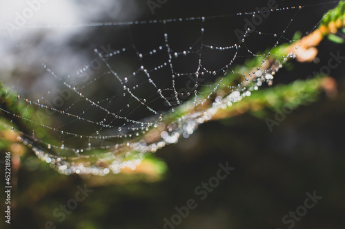 Leinwand Poster spider web close up in nature