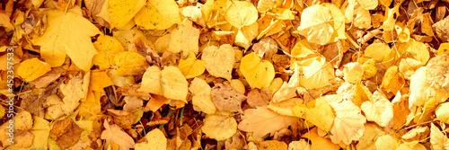 Billede på lærred background of autumn fallen leaves of a maple and birch tree