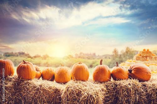 Canvas-taulu Halloween pumpkins on hay.