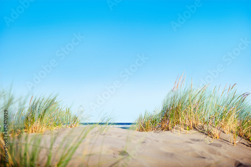 Fotografering Sand Dunes with Grass on Beach