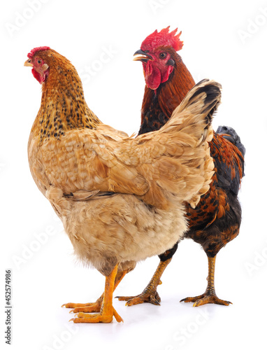 Foto Cock and hen.
