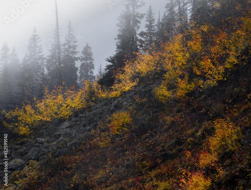 Valokuvatapetti fall colors on hillside