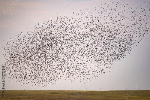 Obraz na plátně Flying birds