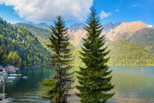 Obraz na plátně Summer landscape with conifers on the Ritsa lake
