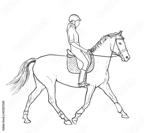 Obraz na płótnie Young woman horse rider performing equine training, horse riding, horse stallion