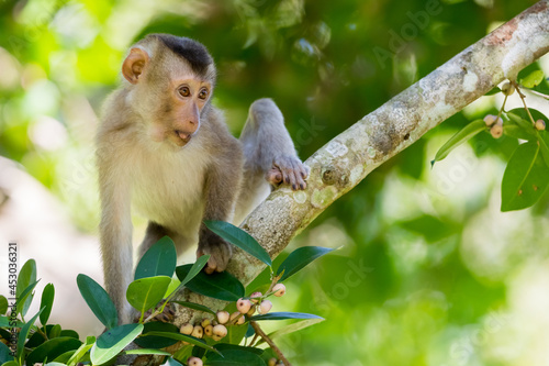 Photo monkey face, monkey, park, travel, tropical, beautiful, asia, animal, animals, a