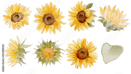 Set of watercolor sunflower illustrations
