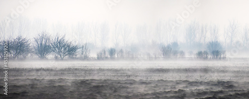 Foto Panoramic shot of shrubs in a farmland during a fog in Bucharest, Romania