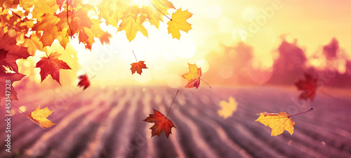 Photo Falling Autumn Maple Leaves Natural Background