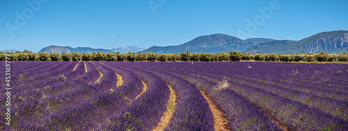 Valokuva Beautiful lavender fields in Valensole plateau, Provence, France