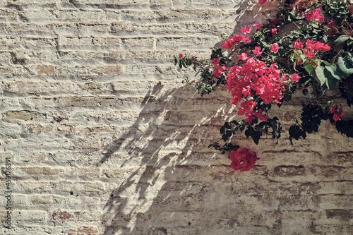 Canvas Print Bouganvillea on bricks white wall
