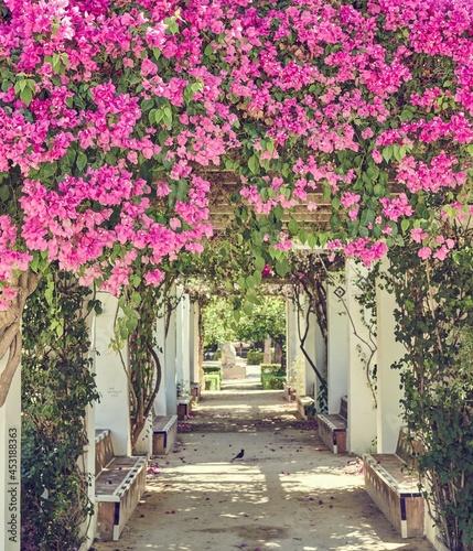 Canvas Print Bougainvillea flowers in a mediterranean garden