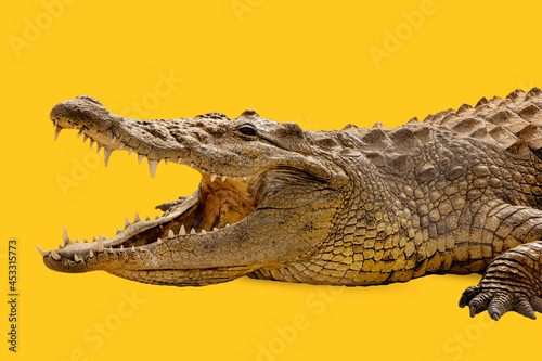 Crocodile head open mouth isolated on yellow background Fototapet