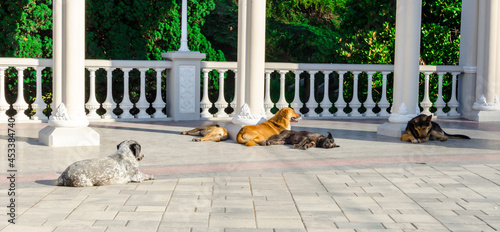 Fotografiet homeless dogs on the marble floor on a sunny day near the colonnade