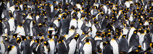 Photographie A penguin colony in Antarctica, beautiful view of lost penguins