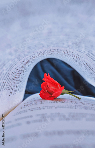 Fotografiet rose and book