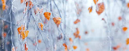 Fotografia Frost-covered birch branch with dry leaves in the fog on a blurred background, p