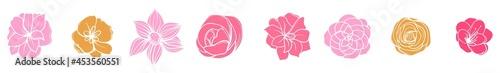 Fotografia camelia flowers vector eps 10