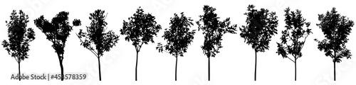Fotografie, Obraz Silhouette of beautiful trees, set