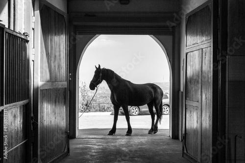 Fototapeta horse in stable
