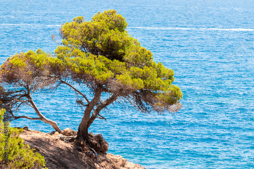 lonely tree on the costa brava one summer day in the middle of the afternoon wit Fotobehang