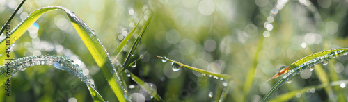 Fotografia grass with dew drops in the morning - bokeh background