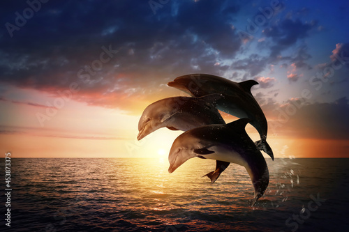 Beautiful bottlenose dolphins jumping out of sea at sunset Fototapeta