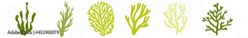 Fotografia Underwater seaweed vector elements