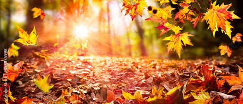 Fotografiet Leaves Falling In Defocused Autumn Forest With Sunlight