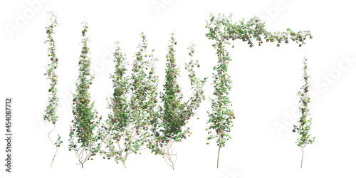 Leinwand Poster Climbing plants creepers isolated on white background 3d illustration