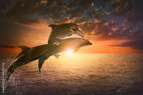Beautiful bottlenose dolphins jumping out of sea at sunset Poster Mural XXL