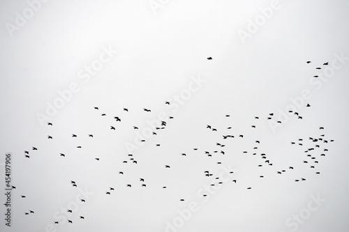Fotografija Volo libero di uccelli in gruppo
