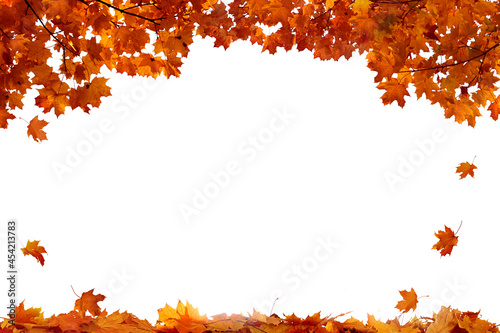 Obraz na plátně Autumn colored falling maple leaves isolated on white background