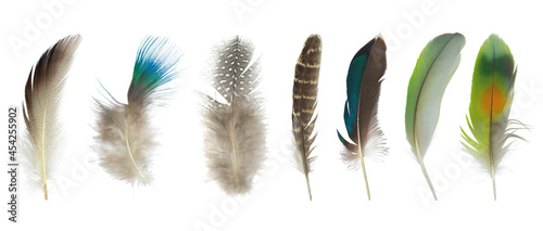 Fotografie, Tablou Beautiful collection feather isolated on white background