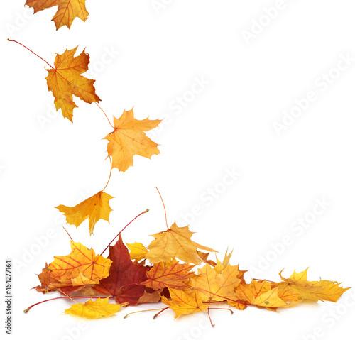 Canvastavla Pile of autumn colored leaves isolated on white background