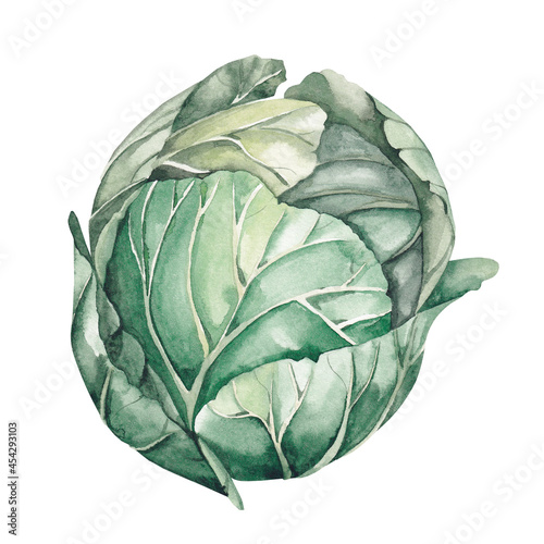 Canvas Watercolor cabbage on a white background