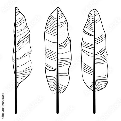 Fotografia Banana leaf drawing line art template vector set