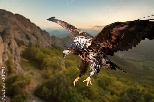 Leinwand Poster Bird.