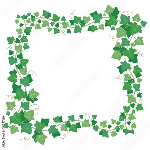Fotografie, Obraz Vine ivy green leaves frame