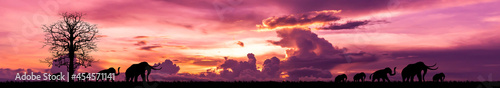 Photographie Elephant silhouettes walking on the sunset,Panorama sunset background