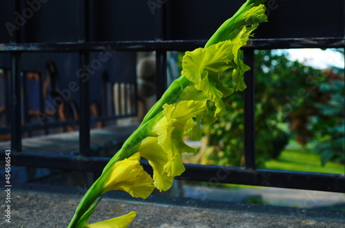 Wallpaper Mural branch of beautiful yellow gladiolus