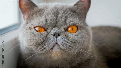 Obraz na plátně close up portrait of a cat