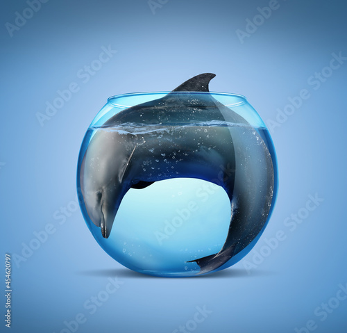 Obraz na plátně Dolphin in glass aquarium on light blue background