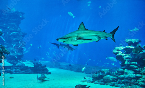 Fotografering Sharks in large aquarium in the Red Sea swim among other exotic fish