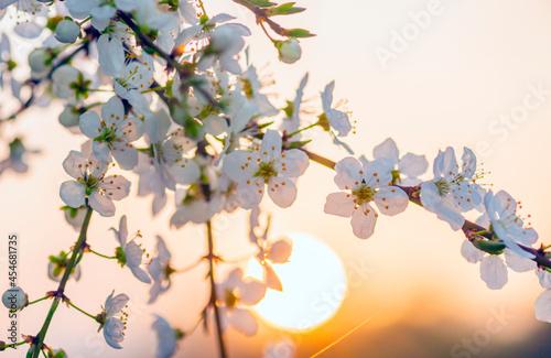 branch of a cherry tree Fotobehang