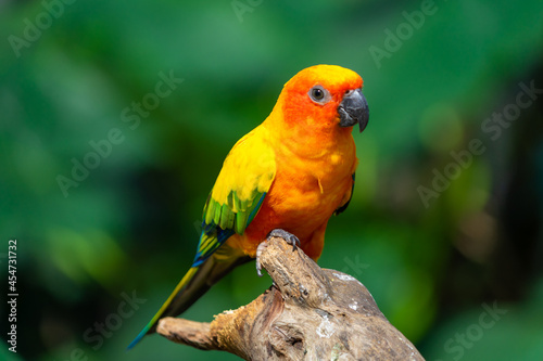 Fotografia Sun conjure parrot with selective focus background and copy space