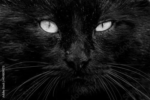 Obraz na plátně Black Cat