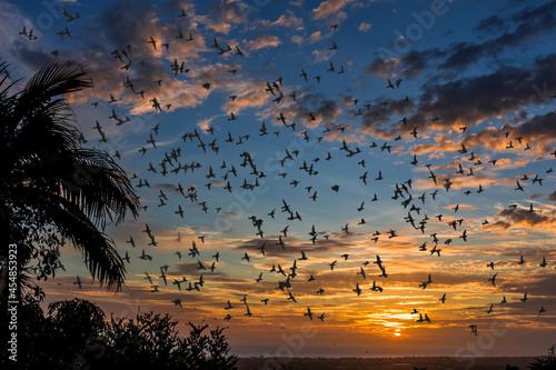 Vols d'étourneaux au soleil couchant Fototapet
